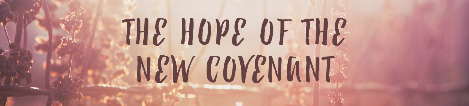 Community Group Guides: The Hope of the New Covenant